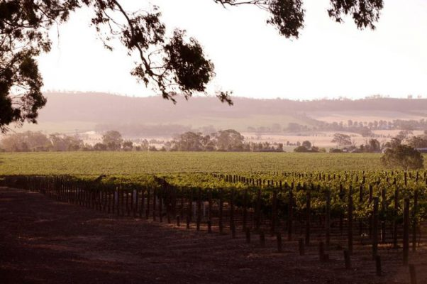 galli-estate-vineyard-940x625