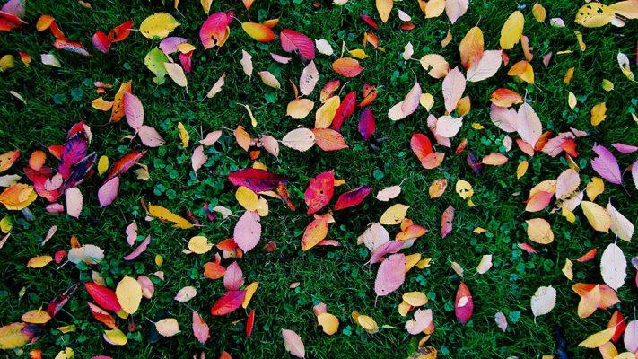 autumn-gardening