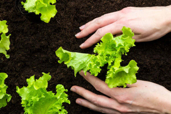 Home Grown Goodness: Tips for Edible Gardens in Small Spaces
